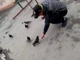 накормили дикого голубя